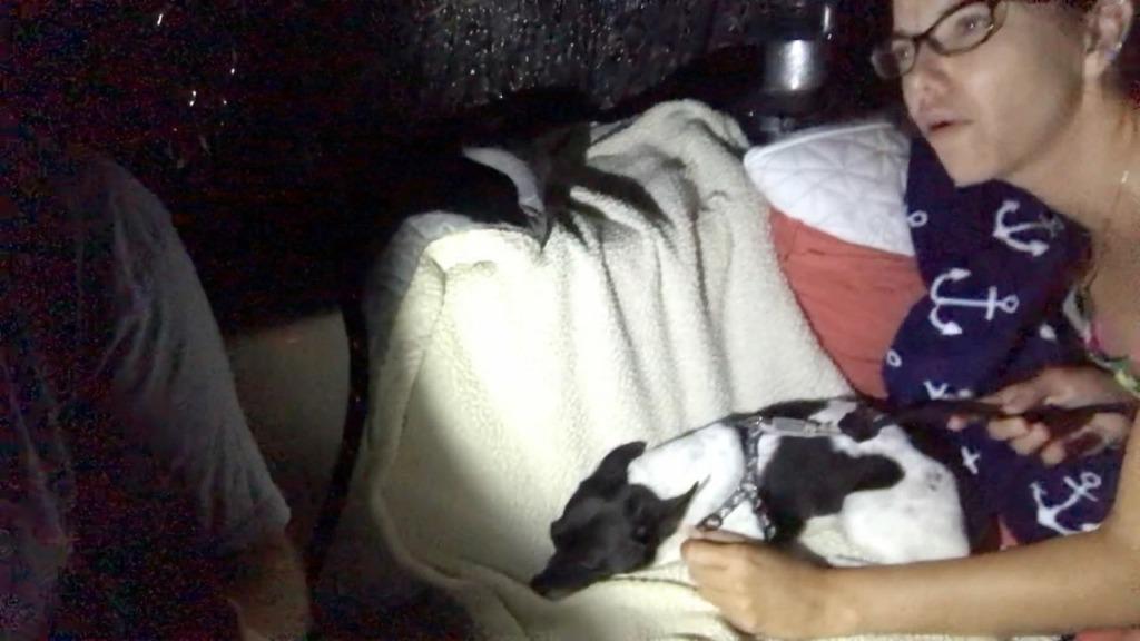Seasick dog on rough night passage